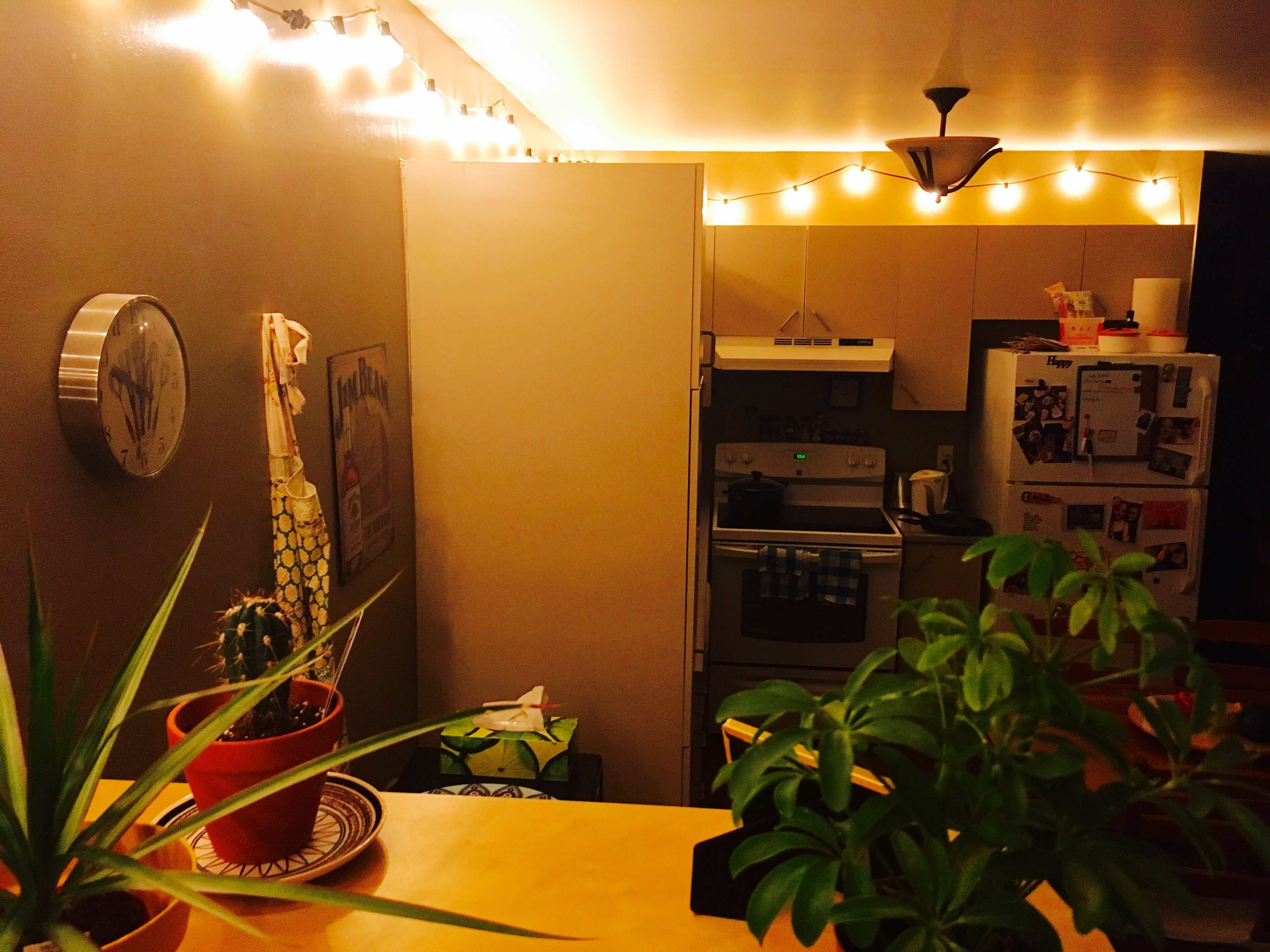 String lights hanging along kitchen walls with plants in the foreground